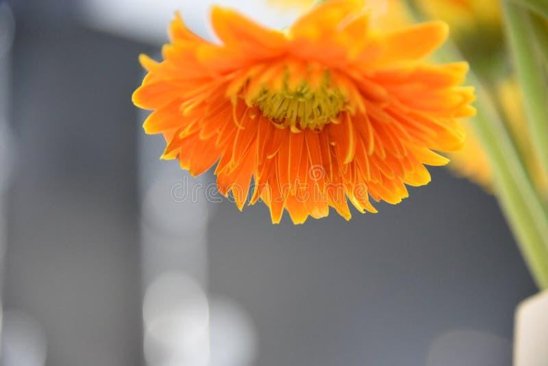 Orange Flower Macro Photography royalty free stock images
