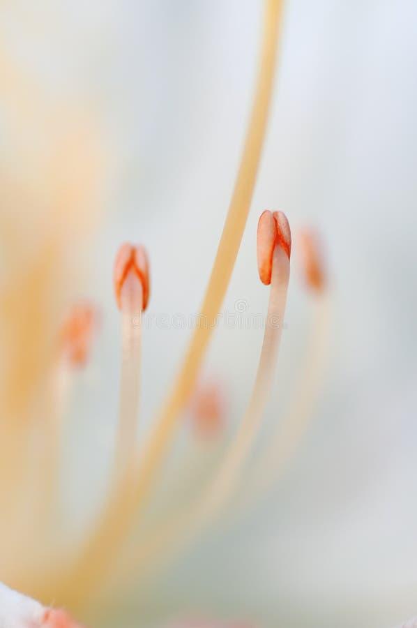 Orange, Flower, Macro Photography, Close Up royalty free stock image