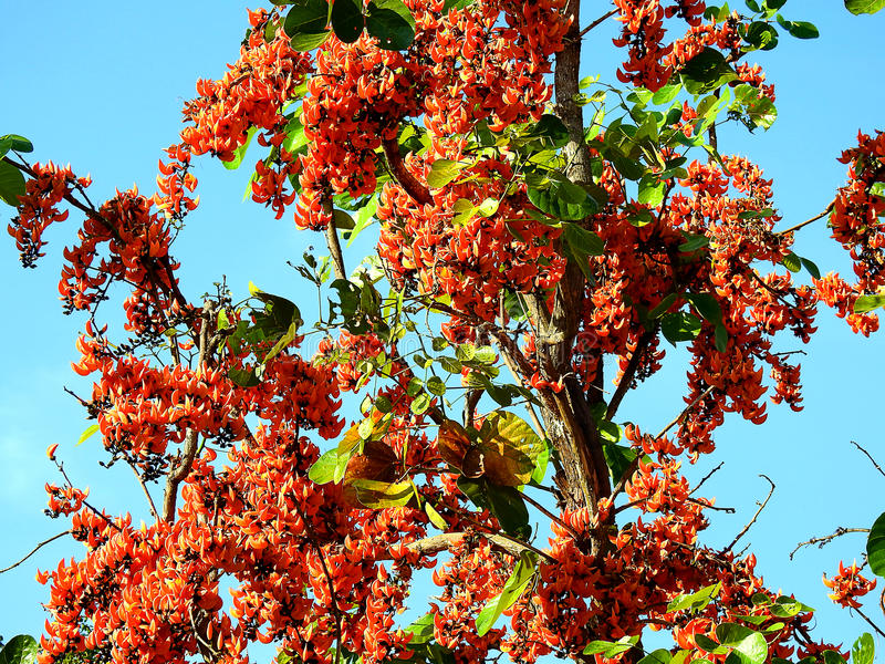 Orange flower Palas. stock photo