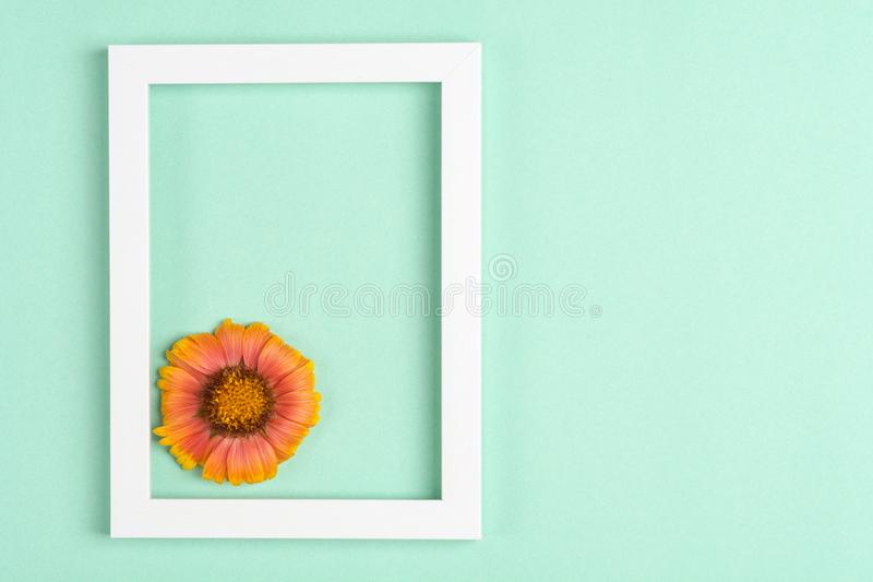 Orange flower, photo frame on a mint background. Top view, copy space. Flat lay stock photos