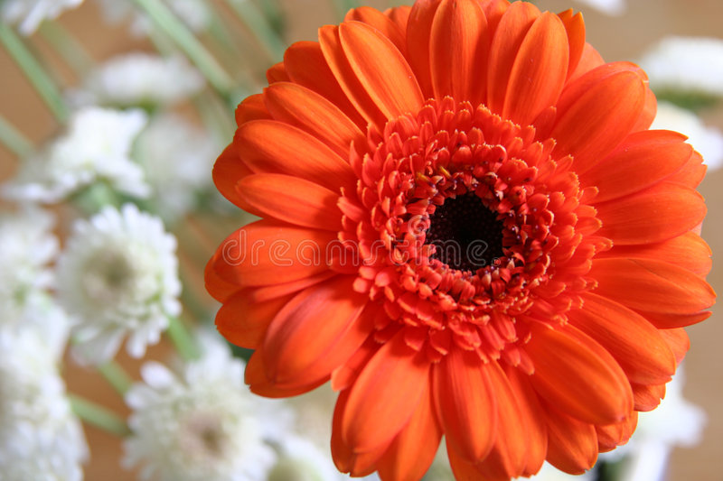 Orange flower with small white blossoms stock photos