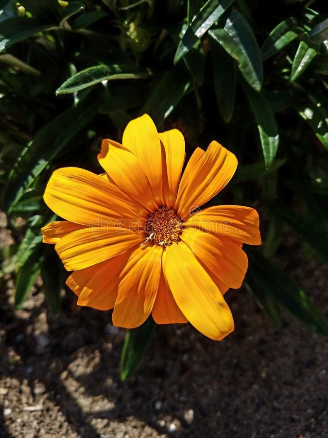 Orange flower up close. Up close view of orange flower royalty free stock photography