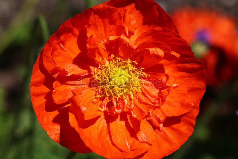 Orange Flower With Yellow Petals Free Public Domain Cc0 Image