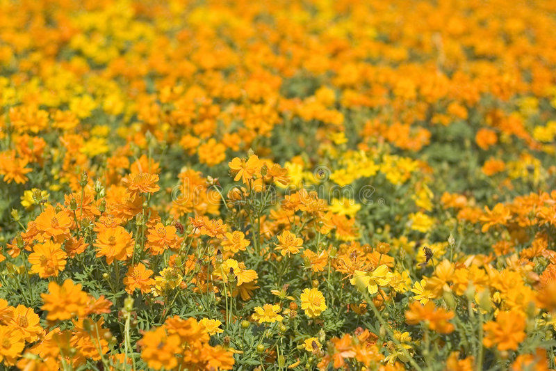 Orange Flowerbed 2 royalty free stock photos