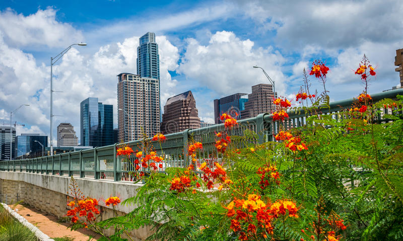 Orange Flowers Austin texas Afternoon Perfection Summer time Bliss Downtown Skyline Cityscape. From the iconic view of Auditorium Shores Park looking at the 1st stock image