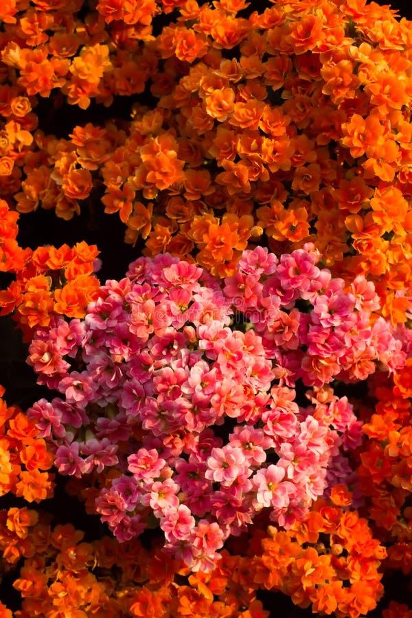 Download Orange flowers background stock image. Image of green - 38007485