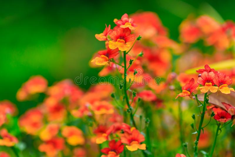 Orange flowers on the background of the garden landscape. stock image