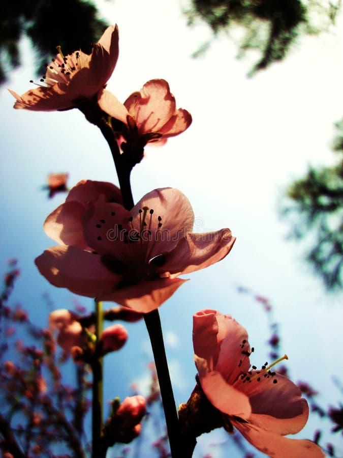Orange flowers blooming in spring royalty free stock image