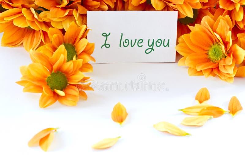 Orange flowers Chrysanthemum stock photo