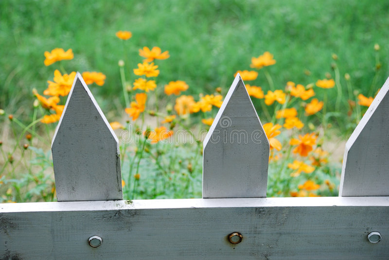 Download Orange flowers and fence stock image. Image of closeup - 6795837