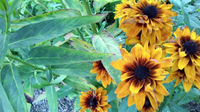 Orange flowers royalty free stock photography