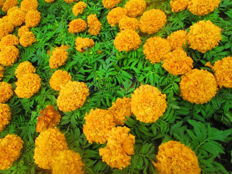 Orange flowers . stock photo