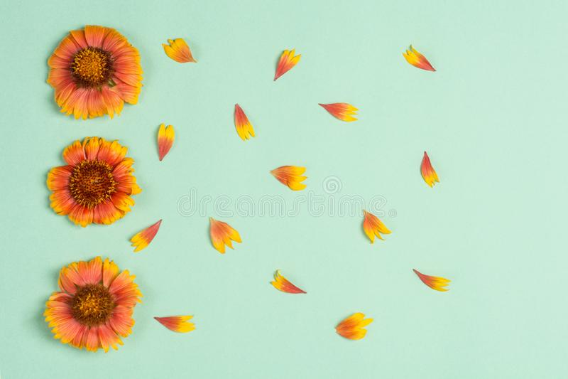 Orange flowers and petals on a mint background. Top view, copy space. Flat lay royalty free stock photo