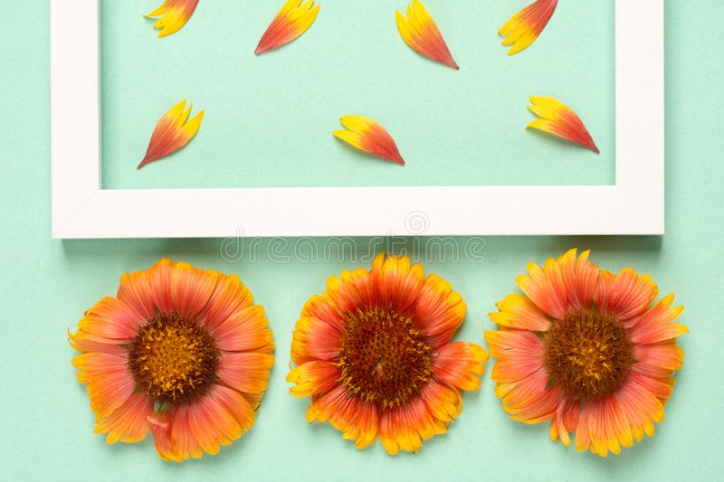Orange flowers and petals, photo frame on a mint background. Top view, copy space. Flat lay stock images