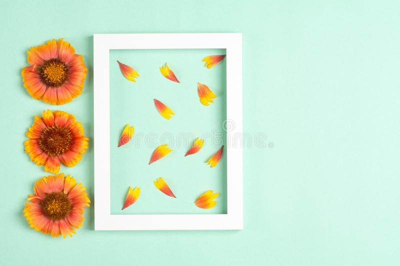 Orange flowers and petals, photo frame on a mint background. Top view, copy space. Flat lay stock photography