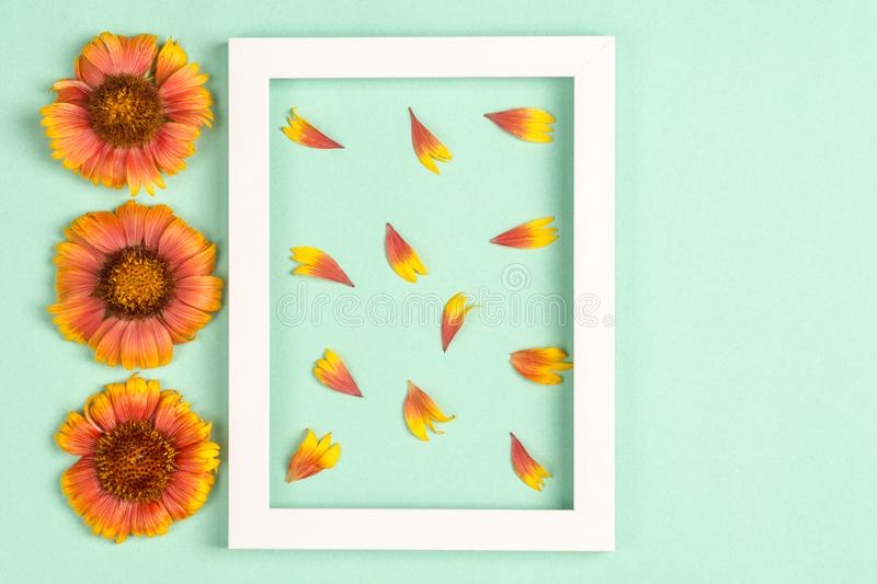 Orange flowers and petals, photo frame on a mint background. Top view, copy space. Flat lay royalty free stock photos