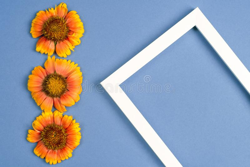 Orange flowers, photo frame on a blue background. Top view, copy space. Flat lay royalty free stock photography