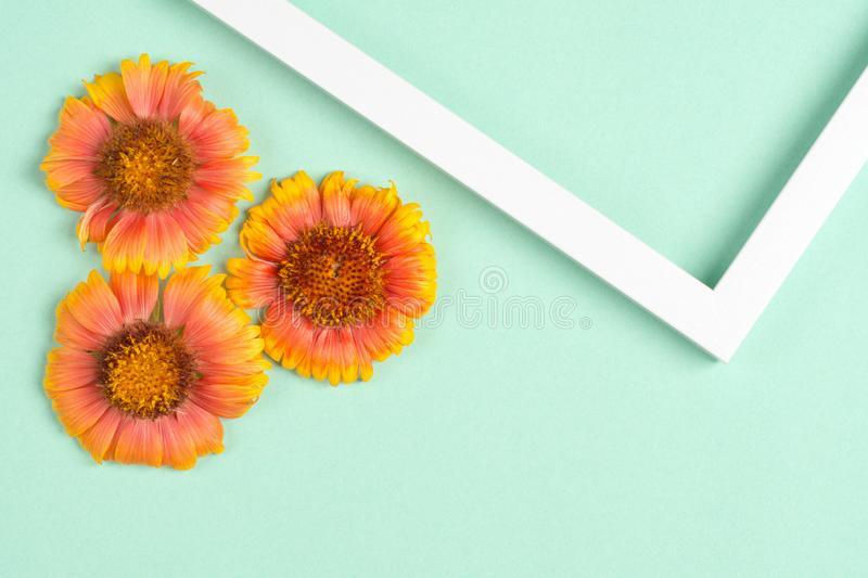 Orange flowers, photo frame on a mint background. Top view, copy space. Flat lay royalty free stock images