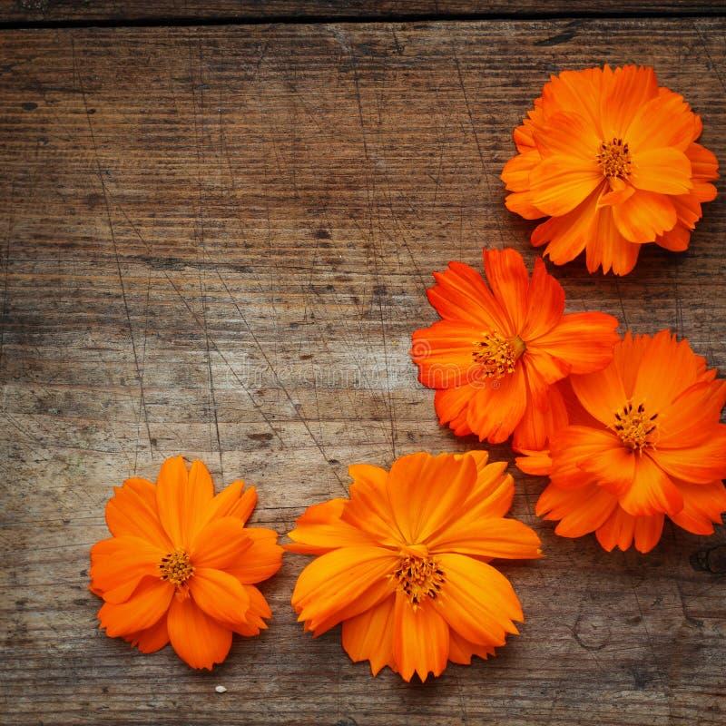 Orange Flowers On Wood Stock Photo. Image Of Plant, Frame