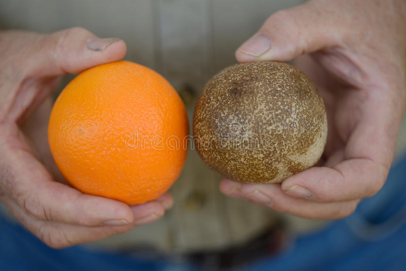 Orange fossilisée photo libre de droits