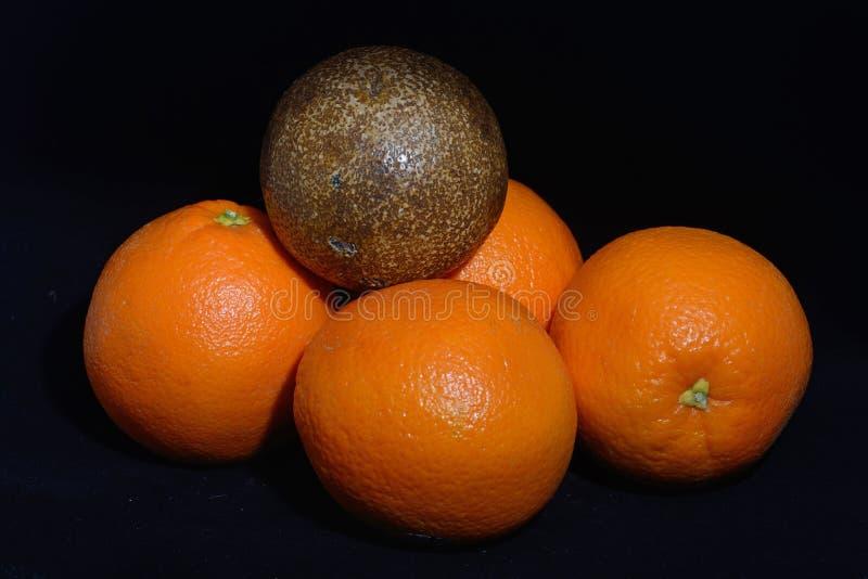 Orange fossilisée image stock