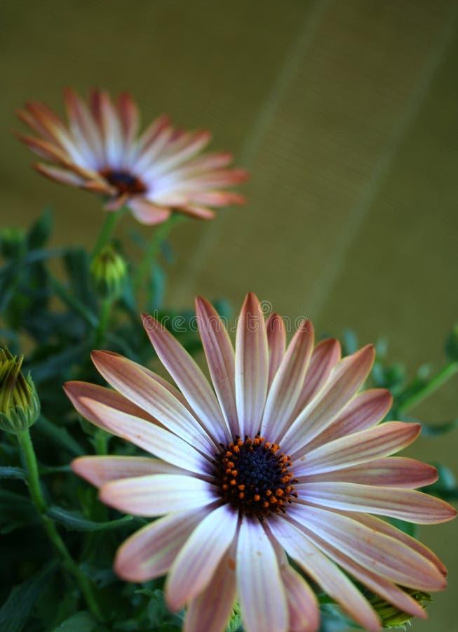 Orange Frühlingsblume Stockbild