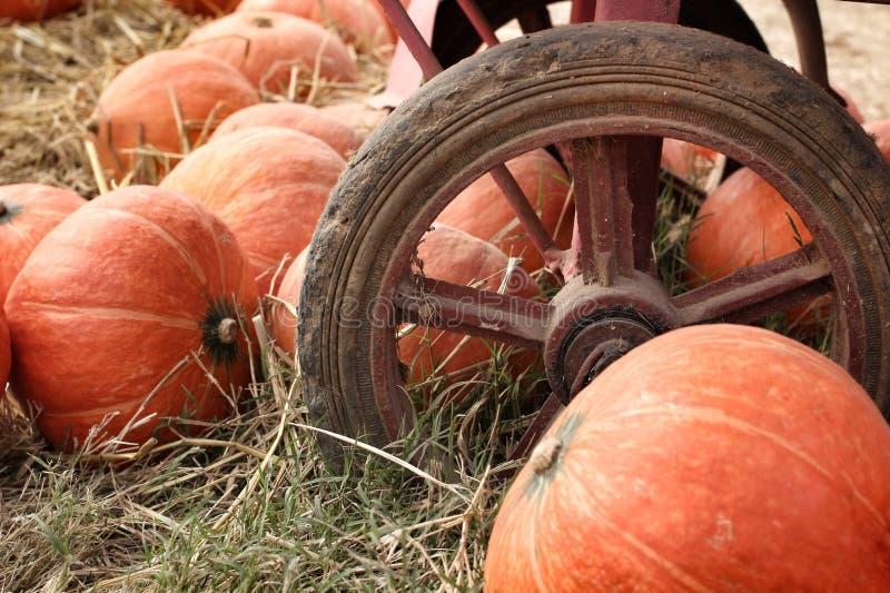 Orange fraîche de potiron dans la ferme photographie stock
