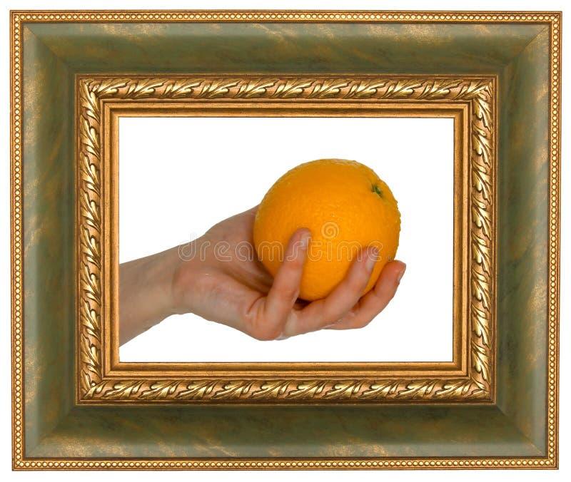 Orange in frame royalty free stock image