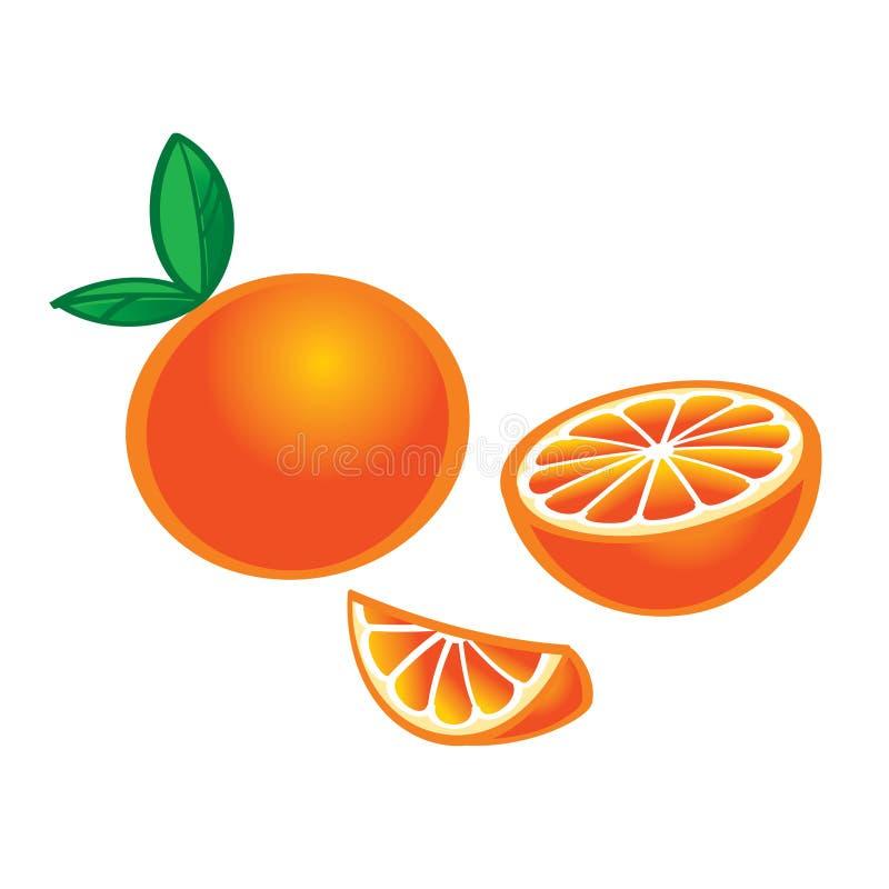 Download Orange stock vector. Illustration of orange, exotic, care - 31435704