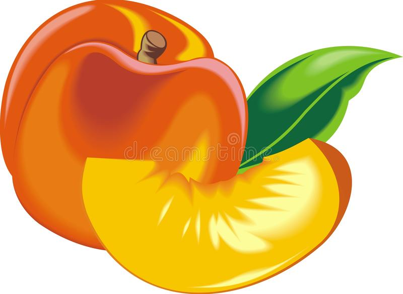 Download Orange and fresh peach stock vector. Illustration of tropic - 30294327