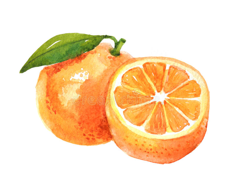 Orange Frucht mit Blatt, Aquarellillustration stockfotos
