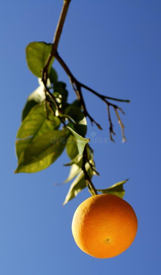 Download Orange Fruit Stock Image - Image: 1714581