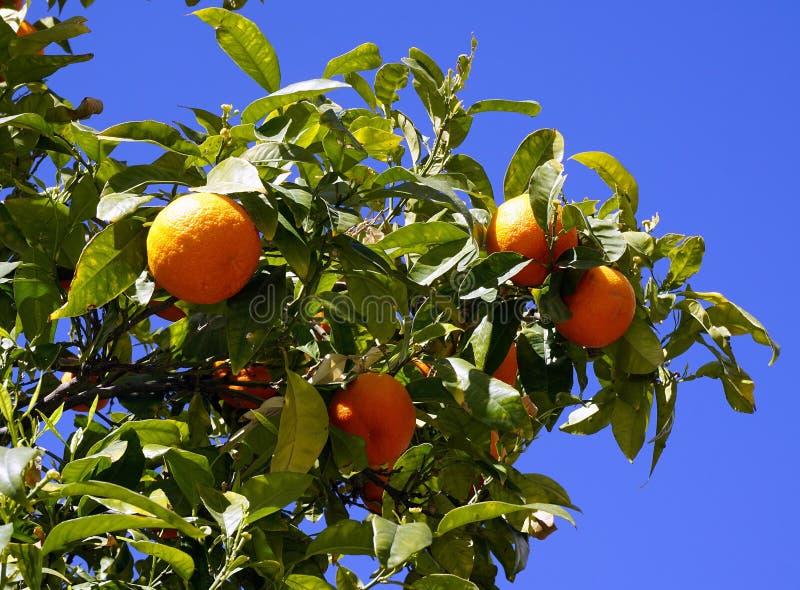 Orange Fruit Free Public Domain Cc0 Image