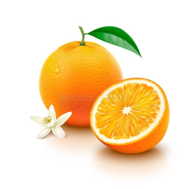 Orange fruit with half and flower on white background. Whole orange with leaf, slice and flower on white background. Vector illustration royalty free illustration