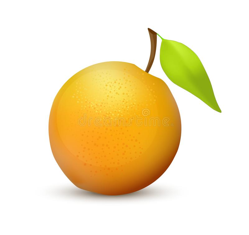 Orange fruit, realistic vector icon illustration isolated on white background. Vibrant and juicy colors. stock illustration