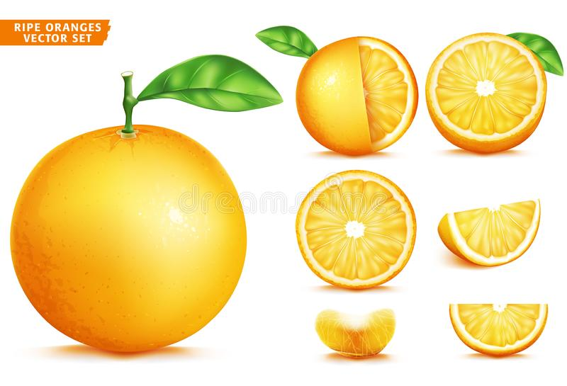Orange Fruit Ripe Realistic 3D Vector Food Set. Whole Half and Sliced Version stock illustration