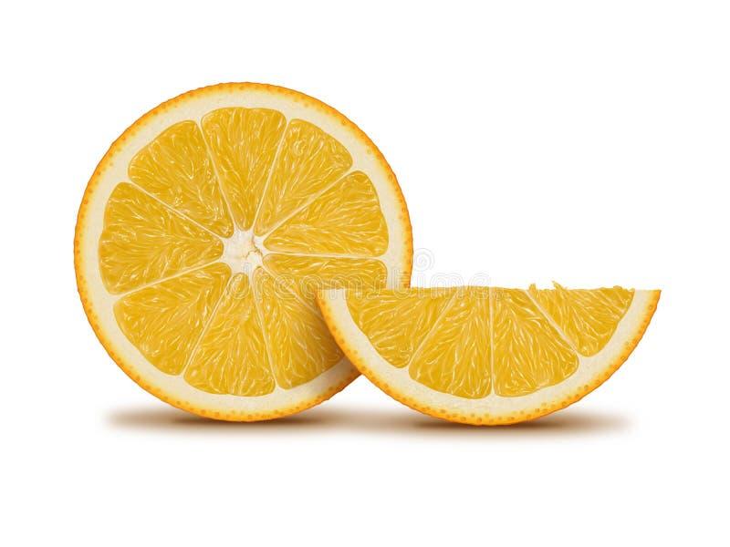 Orange fruit and slice illustration. Digital painting royalty free illustration