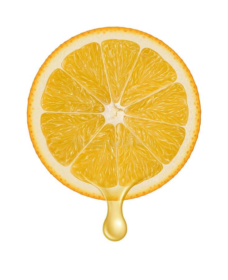 Orange fruit and slice illustration stock illustration