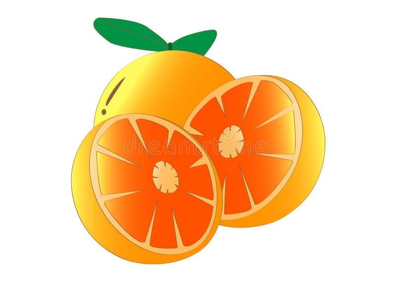 Orange fruits. Many Orange fruits on white background vector illustration
