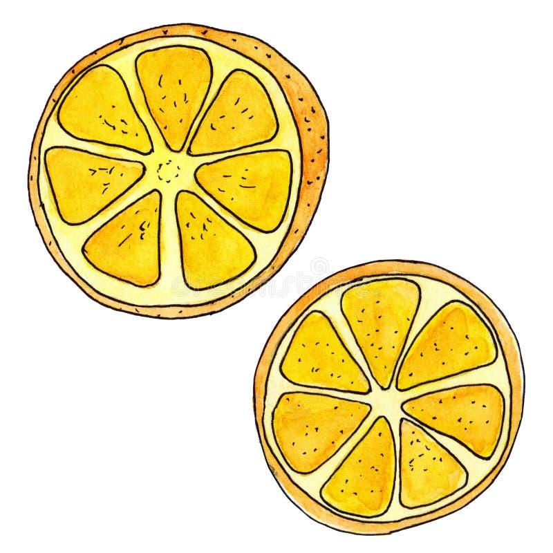 Orange frukt målade på en vit bakgrund med den svarta översikten, halva och skivan vektor illustrationer