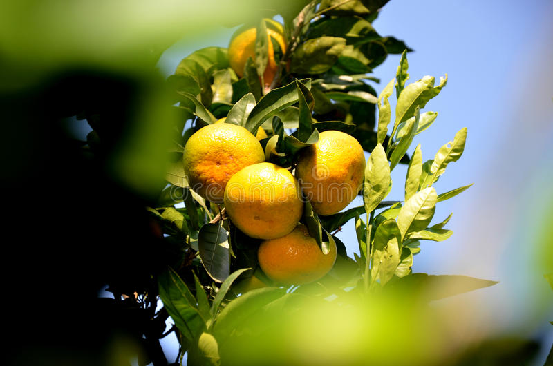 Orange, Gelb stockbild