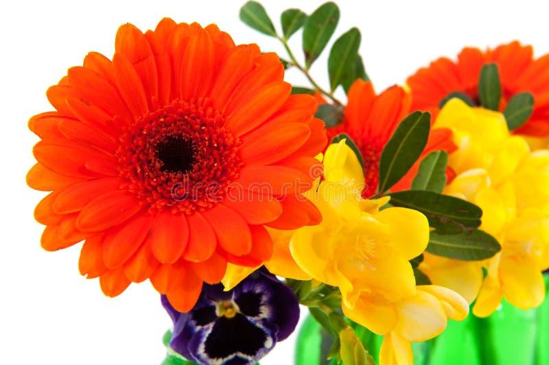 Orange Gerber lizenzfreie stockbilder