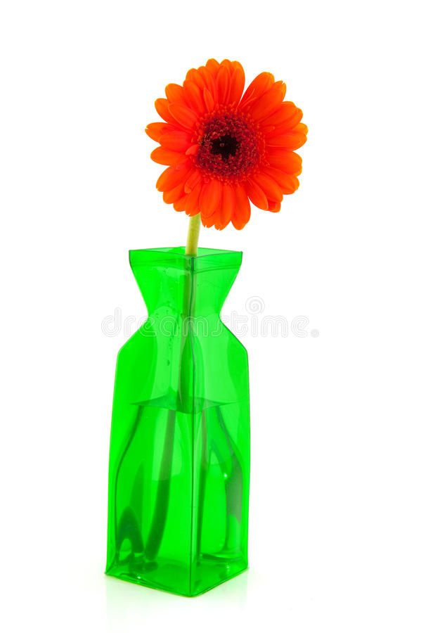Orange Gerber Blume lizenzfreies stockbild