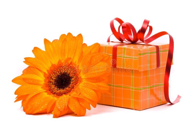 Orange gerber Blume und Geschenkkasten stockfotos