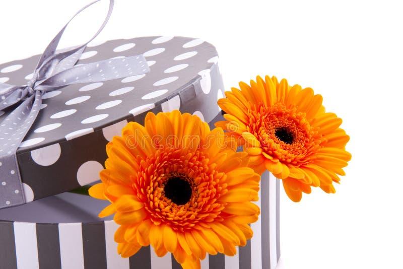 Orange gerber in einem giftbox stockbild