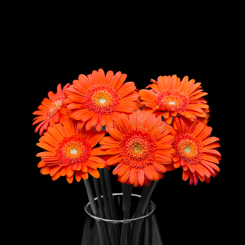 Orange Gerbera Flower In Vase On Black Background Stock