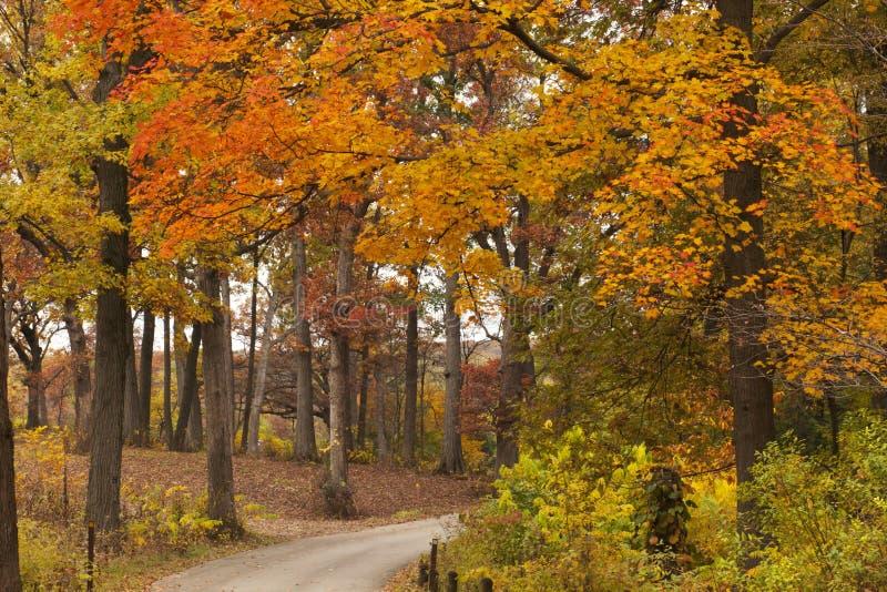 Orange and gold trees line a path through the Morton Arboretum. stock photography