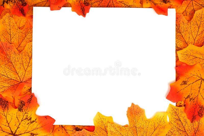 Orange gräns för lönnhöstblad med utrymmekopian över på vit bakgrund royaltyfri bild