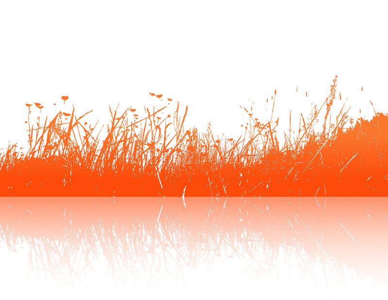 Orange Grass Reflection. Vector Royalty Free Stock Photo