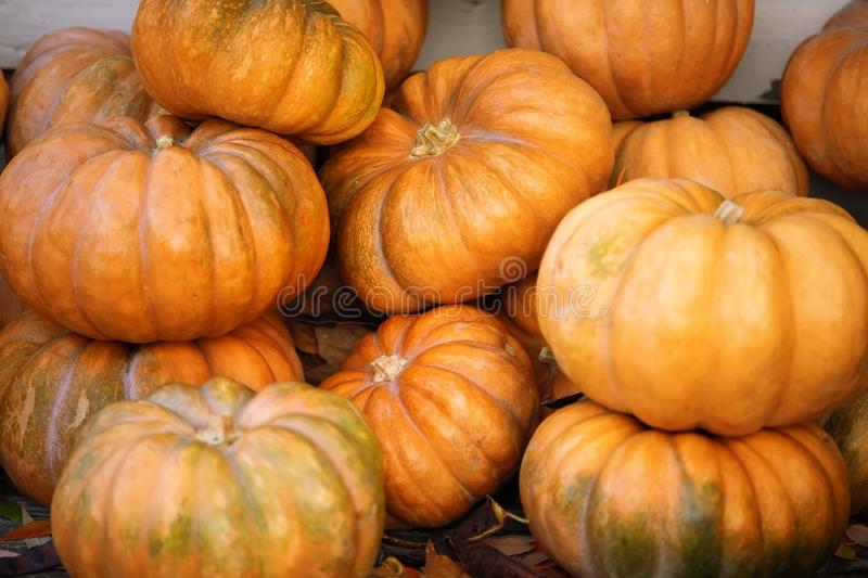 Orange and green pumpkins at outdoor farmer market. Colorful autumn Thanksgiving background with copy space for your stock photography